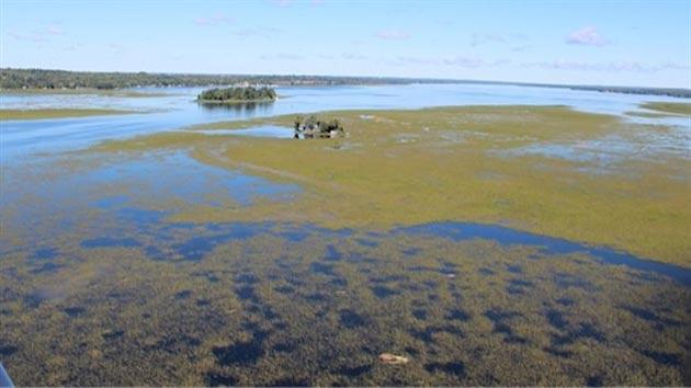 p3Pigeon-Lake-wild-rice-beds